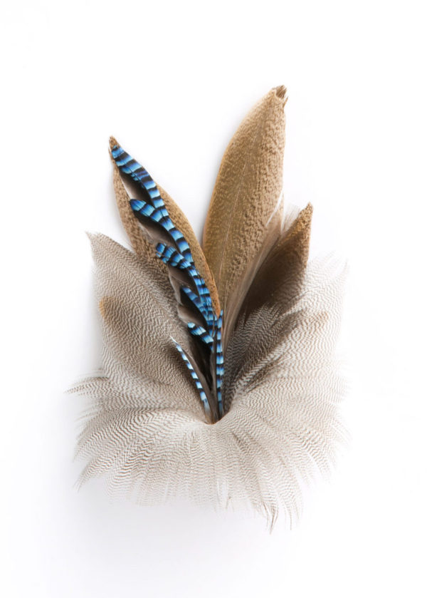 Blue Jay Chain Feather Hat Pin on a white background.